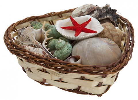 Shell collection in  basket
